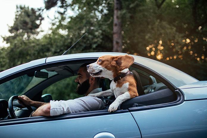 Przewożenie psa i kota w samochodzie – o czym pamiętać?